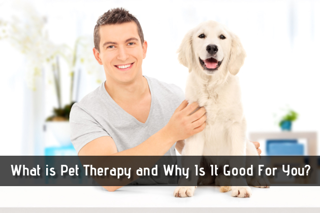 What is Pet Therapy and Why Is It Good For You?